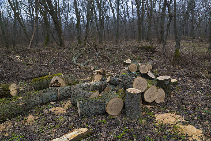 tree logs scatters on the ground