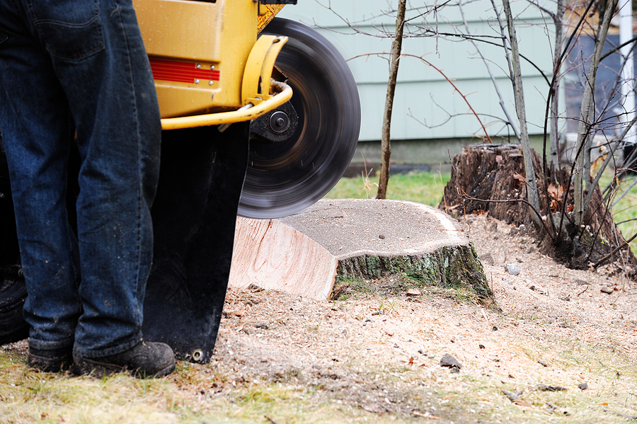 removing the tree stumps