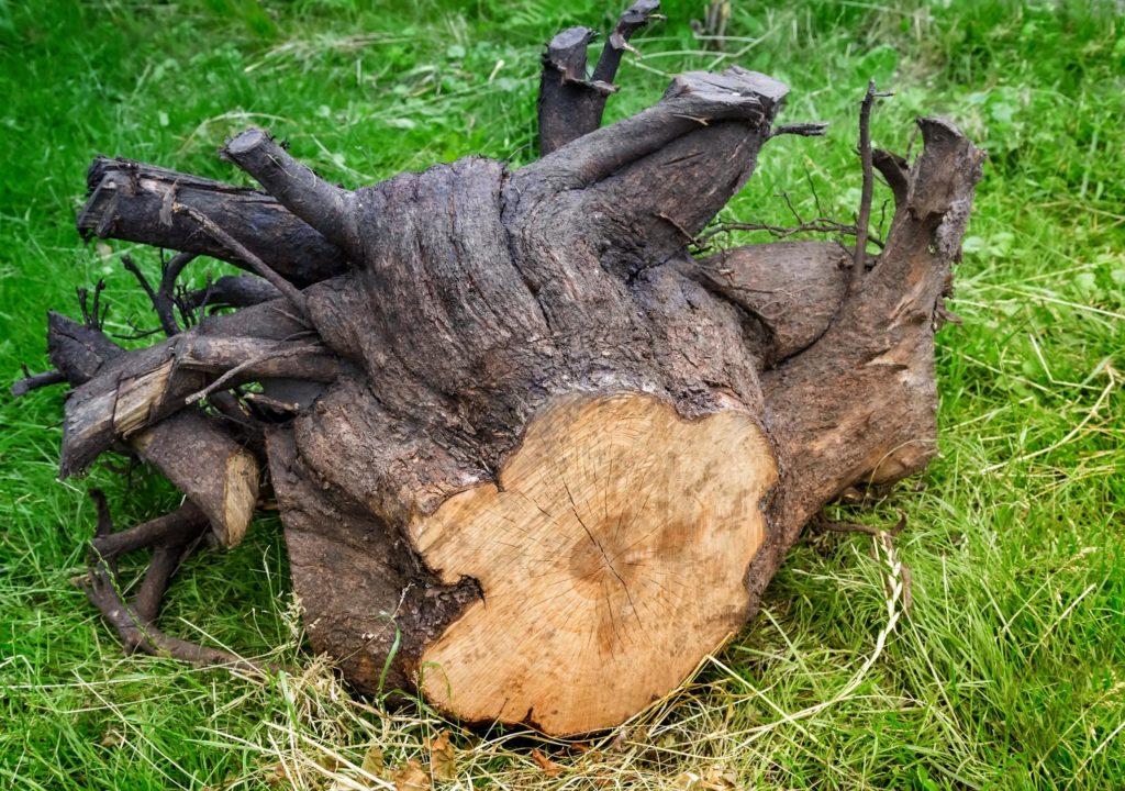 tree stumps on the ground