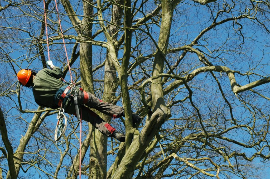 men climbing down from the tree