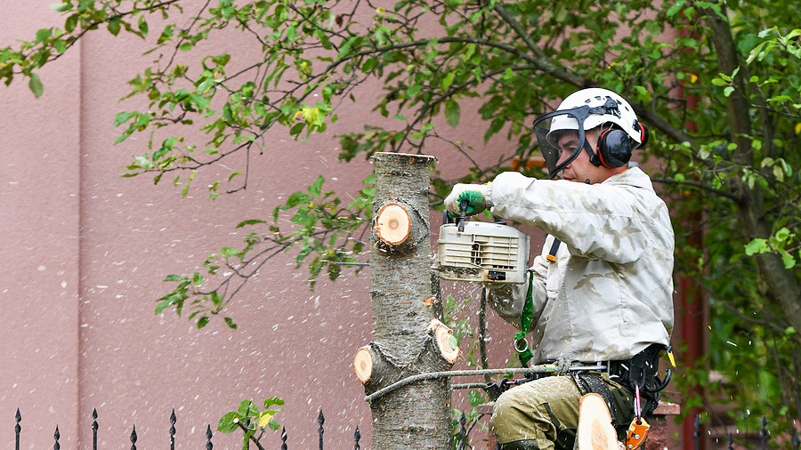 man cuts the tree
